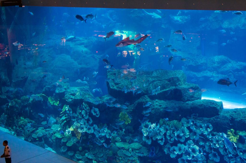 A large fish tank.